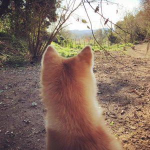 Cani felici e proprietari soddisfatti sono il nostro più importante obiettivo. Prime giornate di apertura, rodaggio andato alla grande 💪💪💪🐾❤️