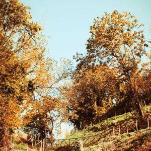 C'è una luce diversa nell'autunno. C'è una velleità di tregua, un bisogno di lasciare le folle estive e avvolgersi nei colori e nelle case.