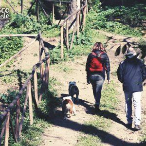 🌳🐶🐾 Primo weekend di rodaggio nel magico bosco a due passi dal Vomero! Il risultato? Guardatelo voi stessi!